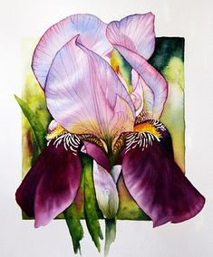 Iris - Watercolor