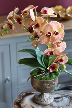 Orchid Flower Arrangements, Orchid Vase, Ikebana Flower Arrangement, Rare Flowers, Flowers Nature, Beautiful Flowers, Orquideas Cymbidium, Indoor Flowering Plants, Orchids Garden