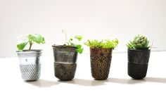Thimbelina's Miniature Garden - Vintage Sewing Thimble Planters  Too cute.