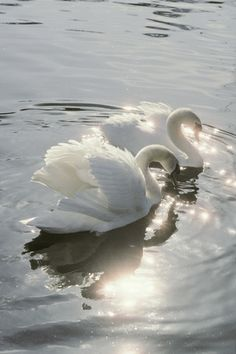 Swan Art, Prints, Paintings & Wall Art for Sale Angel Aesthetic, Nature Aesthetic, Aesthetic Colors, Aesthetic Photo, Aesthetic Pictures, Vintage Wallpaper, White Wallpaper, Aesthetic Iphone Wallpaper, Aesthetic Wallpapers