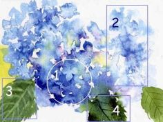 Pattern for Hydrangea Painting | Click on the images below for larger photo references ~ Courtesy of ...