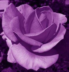 purple http://media-cache8.pinterest.com/upload/28429041367256214_FfmgAkLv_f.jpg uplatette i love purple