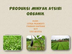 minyak-organik by alicnono via Slideshare