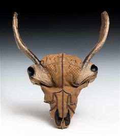 Cervidae Skull