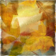 autumn backgrounds_fall texture ❤ liked on Polyvore featuring backgrounds