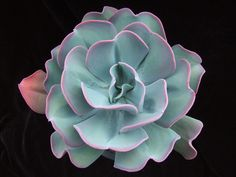 Cheap planting flower seeds, Buy Quality flower seeds directly from China bonsai succulents Suppliers: Fresh Rare Echeveria gigantea Seeds bonsai Succulent Plant Flower Seeds - Succulent Bonsai, Succulent Gardening, Cacti And Succulents, Planting Succulents, Garden Plants, House Plants, Planting Flowers, Propagating Succulents, Echeveria