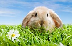 Spring Animal Wallpaper Animals