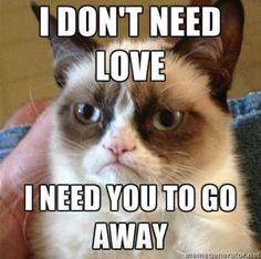 Grumpy Cat gets me.