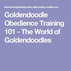 Goldendoodle Obedience Training 101 - The World of Goldendoodles