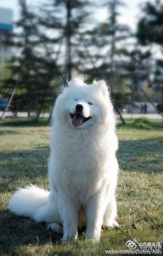 The Sammy Smile~~