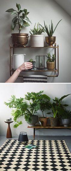 Stylish Houseplant Pots for Indoor Gardening