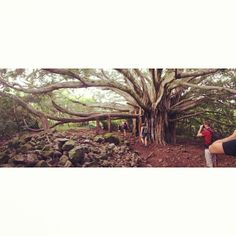On our way up to Waimoku Falls. #roadtohana #maui #hawaii