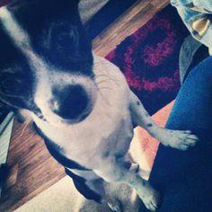 Meine Dog ♥