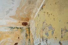 What's involved in Mould Remediation?