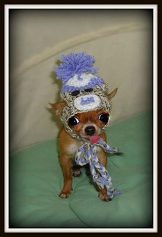 Is this the cutest chihuahua, with a sock monkey hat, you've ever seen? Fashiolista |Pinned from PinTo for iPad|