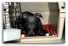 How to successfully crate train a puppy. The most helpful informative website I've found on it. Kennel Training A Puppy, Training Your Puppy, Dog Training Tips, Best Puppies, Dogs And Puppies, American Dog, Puppy House, Crate Training, Dog Crate