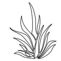 Coloring page: coloring pages seaweed attractive with 12 mapleton nurseries free pertaining to 19 from Grass Drawing, Line Drawing, Colorful Pictures, More Pictures, Underwater Plants, Amazing Grass, Page And Plant, Plant Pictures, Desktop Pictures