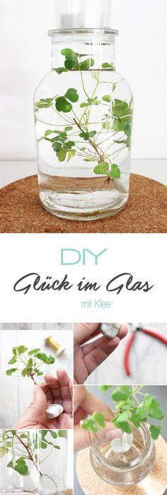 Dani von Gingered Things zeigt dir auf ihrem DIY Blog wie du aus Klee und einem schönen Glas mit Wasser eine tolle Deko machen kannst. Eigent sich auch prima als Geschenk.