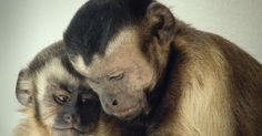 What happens when two monkeys are paid unequally? Fairness, reciprocity, empathy, cooperation -- caring about the well-being of others seems like a very human trait. But Frans de Waal shares some surprising videos of behavioral tests, on primates and other mammals, that show how many of these moral traits all of us share.