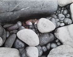 Crab in the rocks painting Acrylic on canvas