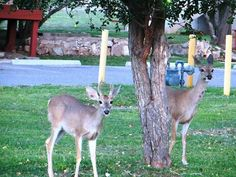 More deer on Fort Huachuca Facebook page.