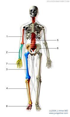 La necessità di una classificazione delle fratture. Interessa il chirurgo ortopedico se ne avvantaggia il paziente.