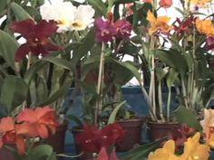 ▶ Qual o melhor substrato para orquídea? - YouTube