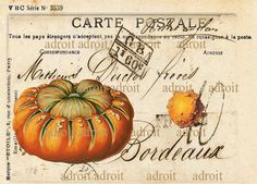 FRENCH Post Card Warty Pumkins by Louis Adroit
