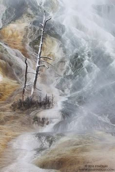 Steam rises up from beneath a dead, snow dusted tree. Standing petrified on a hillside laden with colourful cyanobacteria. These micro-organisms are growing in the super heated water that spews out of Mammoth Hot Springs, Yellowstone National Park, Wyoming, USA.