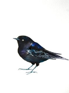 """""""Brewer's Blackbird"""" by Kristina Closs"""