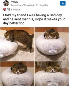 Must See This Incredible Volunteer Visits Animal Shelter Every Day to Nap With Cats Animal Jokes, Funny Animal Memes, Funny Animal Pictures, Cat Memes, Cute Pictures, Cute Little Animals, Cute Funny Animals, Funny Cute, Cute Cats