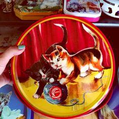 Minäkö keski-ikäinen?: Kissamaista menoa