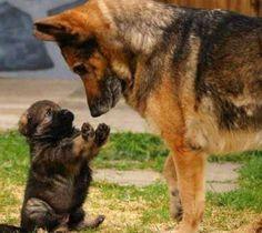 Mama I'm innocent I promise
