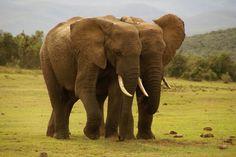 #Kruger Park #South Africa