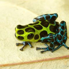 Frogs are so cool!