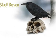 NobleWares Image of Skull Raven Statue 7727 by YTC Summit Collection
