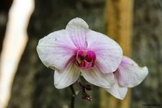 Closeup of an orchid