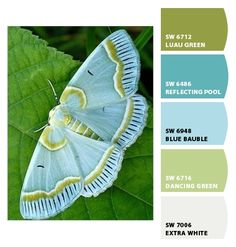 Beautiful aqua moth - Paint colors from Chip It! by Sherwin-Williams