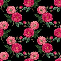 Free for private and commercial use Rose Background, Dose Of Colors, Vintage Roses, View Image, Free Stock Photos, Color Splash, Pretty In Pink, Pink Ladies, Pastel