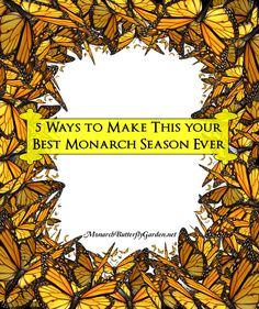 5 Ways to Support Monarch Butterflies WHILE making 2016 your Best Monarch Season yet...