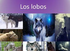 Lobo, wolf, lobos, wolves. Transmiten coraje, lealtad, temperamento, dulzura, misterio.