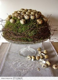 moss and eggs...