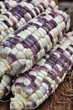 Purple, plum, and white corn. Plum Purple, Shades Of Purple, Purple Colors, Purple Haze, Fruit And Veg, Fruits And Vegetables, Rainbow Corn, Glass Gem Corn, Harvest Corn