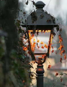 Image about light in Autumn the best season of the year 🍂 by Sophie Winchester Autumn Day, Autumn Leaves, Dark Autumn, Autumn Trees, Autumn Aesthetic, Seasons Of The Year, Street Lamp, Autumn Photography, Fashion Photography