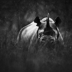 Black and White Wild Animals in Africa