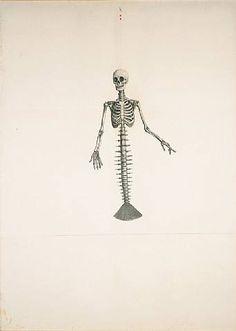 Mermaid fishbone, Ji Dachun, Skeleton Beauty