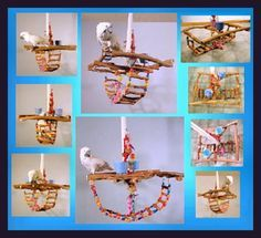 Checked off my Parrot Accessories Wish List! FOR BIRD ROOM: Exotic Wood Dreams & Kissies Workshop hanging gyms