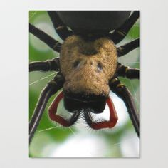 Spider Stretched Canvas by Amy Smith - $85.00