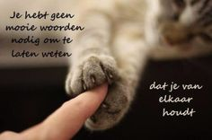 Live with Cat Crazy Cat Lady, Crazy Cats, Cat Paws, Dog Cat, I Love Cats, Cute Cats, Puppy Quotes, Living With Cats, Dutch Quotes