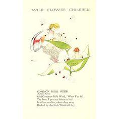 Wild Flower Children c1918 Common Milk Weed Canvas Art - Janet Laura Scott (18 x 24)